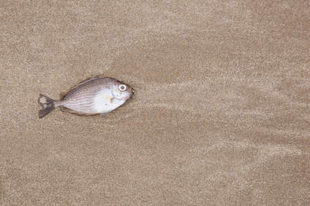 A fish is died on the beach and insects to eat.