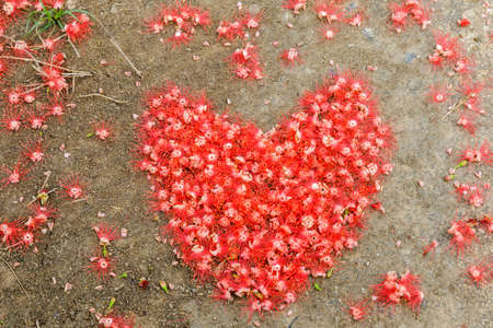 Heart made from red flower on the ground and have beautiful.
