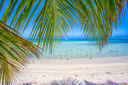 Tropical beach in Belize with Palm trees Imagens