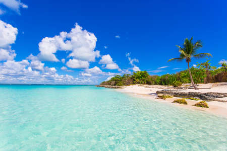 A tropical beach island with beautiful sand and turquoise water with palm trees in the background. It the Saona Island in Dominican Republic and its a typical Caribbean island.