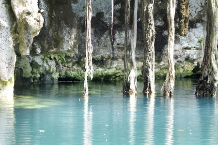 natural wonders: cenote in mexico. these sinkholes are one of the natural wonders of the world