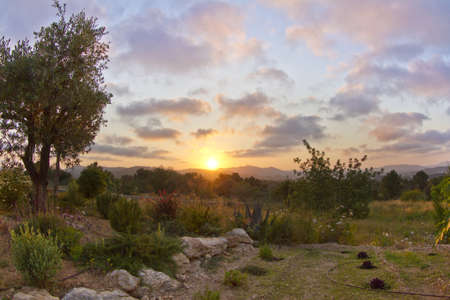 sun setting over a garden in the hills of ibiza, spain