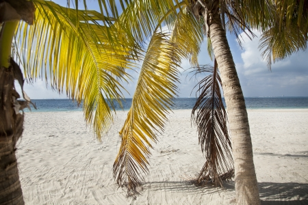 mujeres: palmtrees on the beach in isla mujeres mexico. beautiful colours.