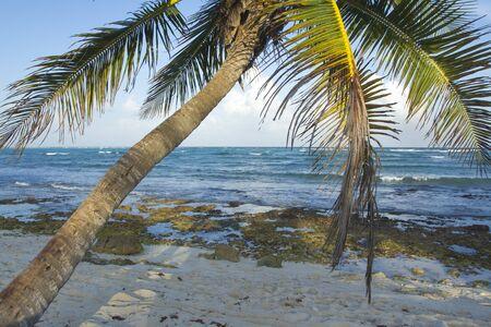 hedonistic: paradise beach, mexican caribbean coast Stock Photo