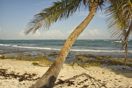 hedonistic: paradise beach, mexican caribbean coast Stock Photo