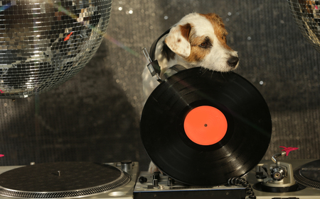 paw russell: a cute jack russell dog Djing in a disco setting