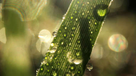 Macro images of dew drops on blades of grass
