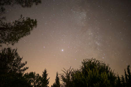 stars in night sky above trees