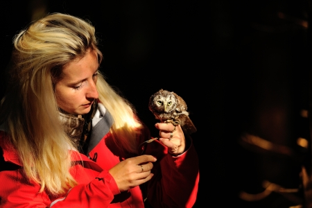 boreal: Beautiful blond falconry lady with Boreal Owl on her hand