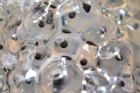 Macro closup view on frog eggs in water