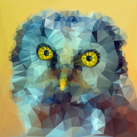 boreal: Boreal owl head illustration from front view