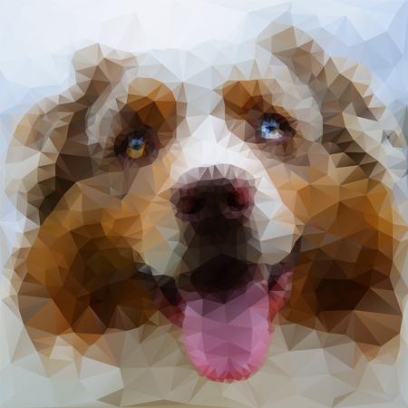 australian shepherd: Illustration of Australian Shepherd face look from closeup view