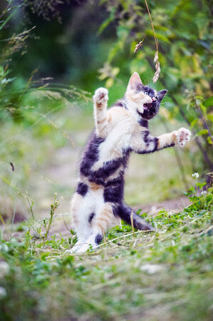 Multicoloured cute kitty jump in a game on the garden