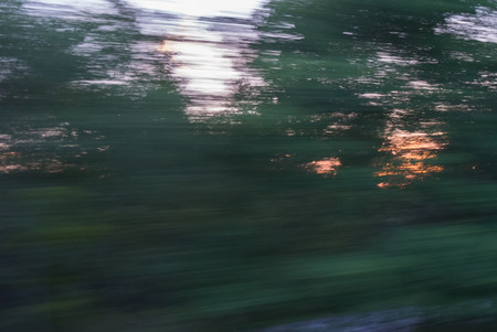 Sensation of high speed. Movement abstration through trees during sunset
