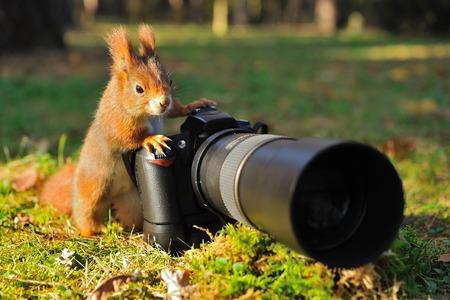 aliments droles: Écureuil comme un photographe avec appareil photo grand professionnel Banque d'images