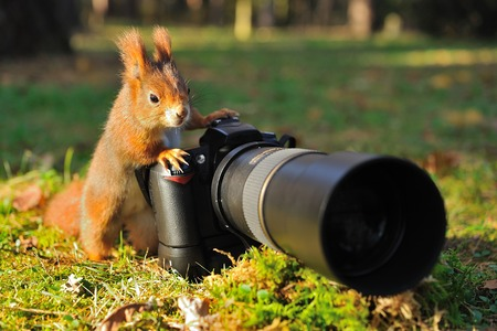 funny animals: Squirrel as a photographer with big professional camera