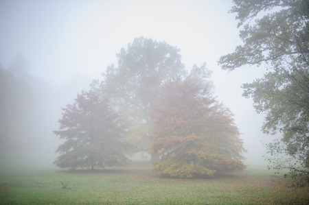 sombre: Autumn silence park with trees in mist on cold morning