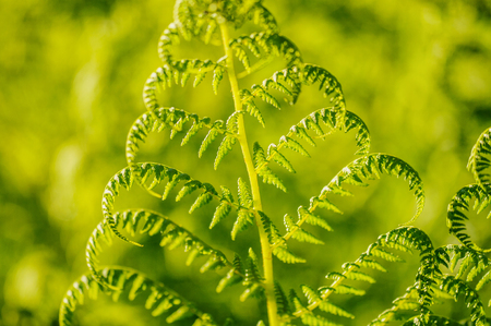 convoluted: Green fern leafs with defocused vibrant background with sunny positive energy