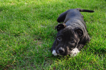 Cute pure bread puppy on the green ground background. Stock Photo