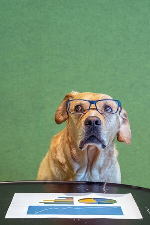 Dog with exeglasses and feared expression above paper with graphs. Office concept. Banco de Imagens