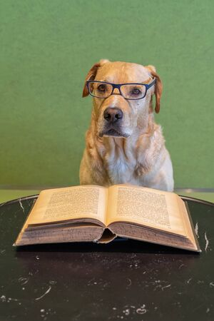 Smart dog looks like a teacher above big open book with hard cover.