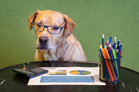 Dog as financial work with report, pens and calculater on table. Dog with eyeglasses. Banco de Imagens