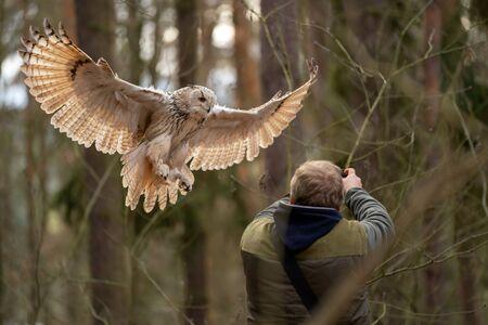 Siberian eagle owl landing on a falconer hands.