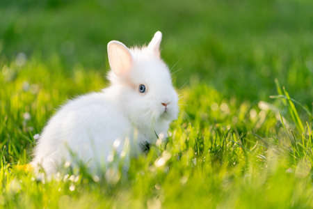 Baby rabbit outside in the garden. Green grass and white animal.