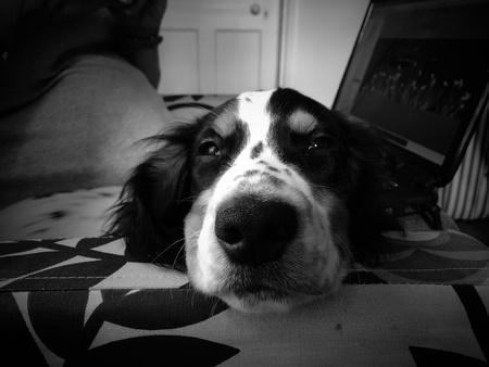 perro negro. Foto de archivo