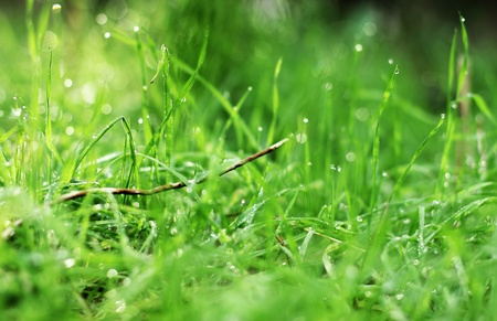 first spring grass in the forest photo