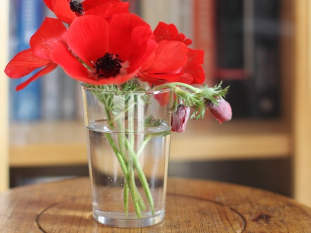 red spring flowers in a glass Stock Photo - 12112220