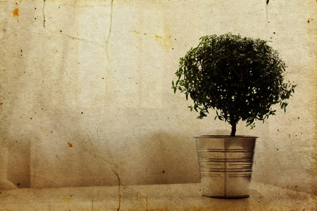 Minimalism. Tree in an aluminum pot on a white table. Stock Photo - 12112614