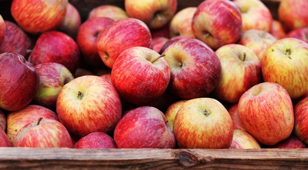 fresh apples from the farm in a wooden crate Stock Photo - 12112094
