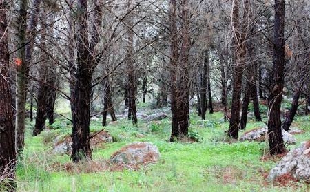spring forest Stock Photo - 12693483