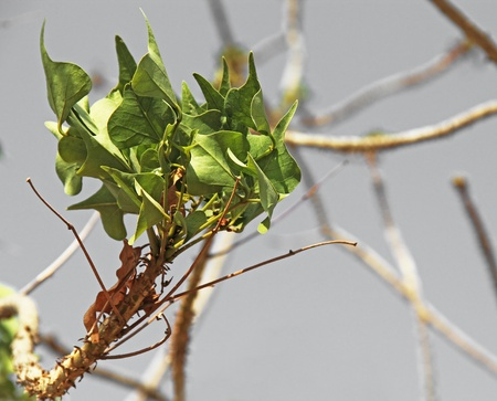 green branch on grey sky background photo