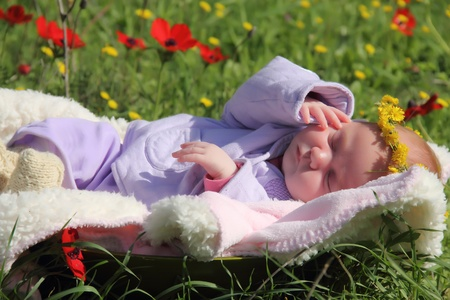 month-old girl lying on the grass next to the red poppies photo