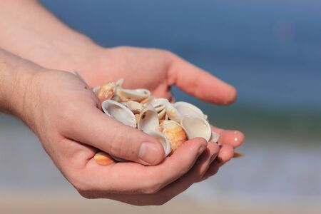 sea shells on the man hands photo