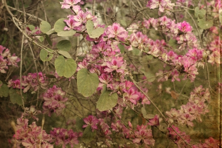 vintage florel background photo