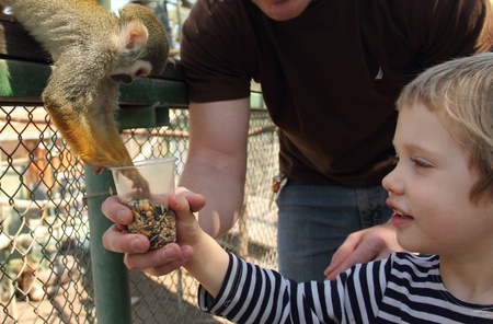 child feeding a monkey in a zoo photo