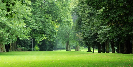 citypark: Green trees in city-park