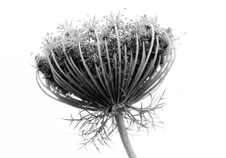 Black and white abstract flower background photo