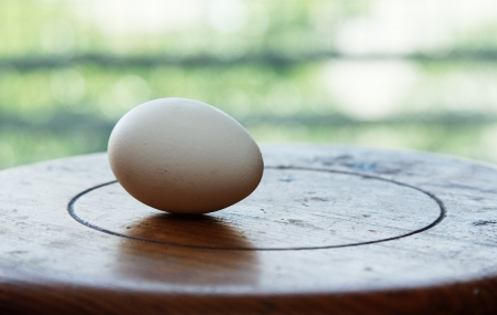 Single egg on wooden table photo
