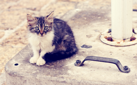 sad little homeless kitten on the street photo