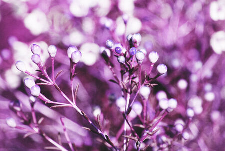 Abstract purple floral background with soft focus and old paper texture photo