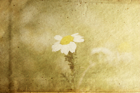 textured paper with flower photo