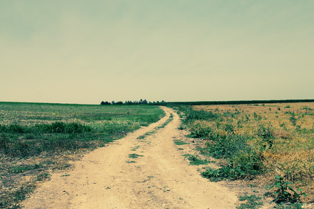 Country road in the fields photo