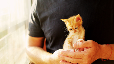 A man is holding little red kitten Stock Photo
