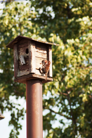 bird feeders. tree house for the birds feeding her young ones photo