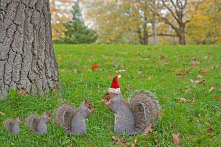 Eating squirrels wearing red Christmas hat sitting on the grass photo