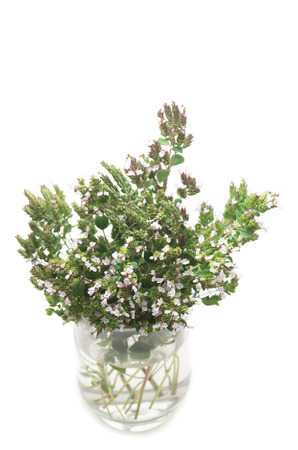 Blooming oregano in cristal vase against white background Zdjęcie Seryjne